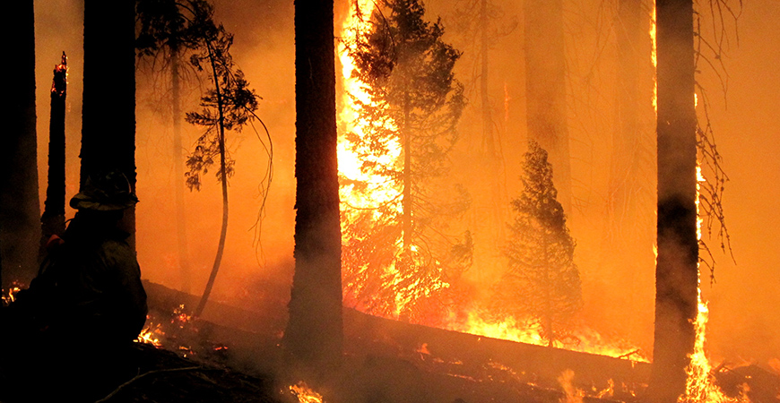 In Yosemite, prescribed burning saved the Tuolumne giant sequoia grove from the Rim Fire, the largest-ever Sierra Nevada wildfire.
